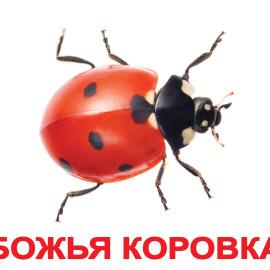 BE-26074.jpg