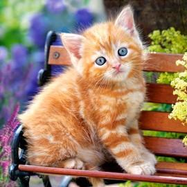 """Кастор пазлы 180 """"Рыжий котенок"""" 32*23 см В-018178"""