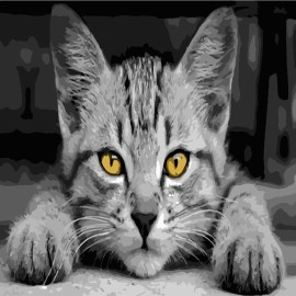 Картина по номерам 40*40 см AS0502 Серый кот