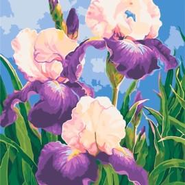 Картина по номерам 30*40 см AS0592 Весенние ирисы