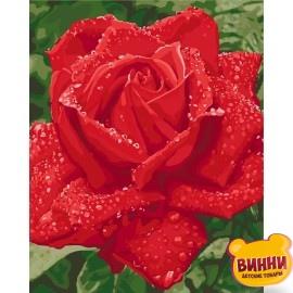 Картина по номерам Нежность розы, 40*50 см KHO3045