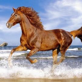 """Кастор пазлы 500 """"Лошадь в галопе""""47*33 /20/"""