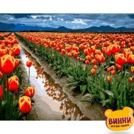 Купить картину по номерам Babylon Поля тюльпанов, 40*50 см VP1164