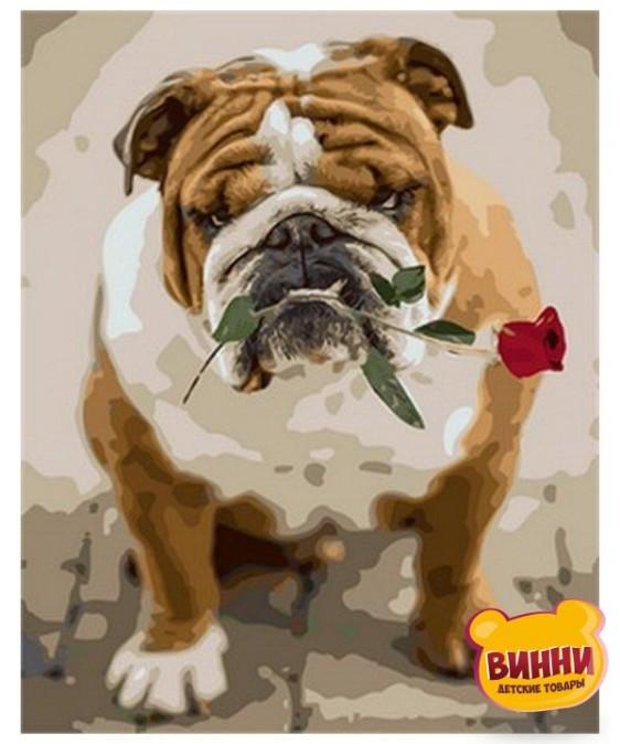 Купить картину по номерам Mariposa Английский бульдог с розой, 40*50 см Q1785