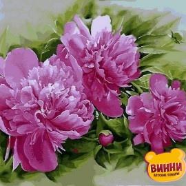 Купить картину по номерам Mariposa Розовые пионы, 40*50 см Q2184