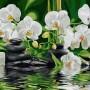 Купить картину по номерам Babylon Оазис наслаждения, орхидеи 40*50 см VP534