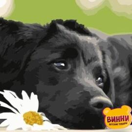 Купить картину по номерам Черный щенок, 40*50 см, VA-0518