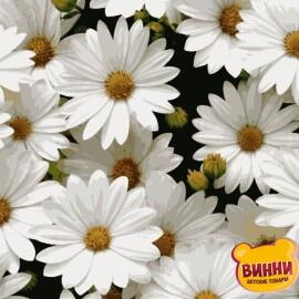 Купить картину по номерам Artissimo Любимые ромашки, 40*50 см, PN7050