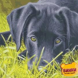 Купить картину по номерам ArtStory AS0968 Грустный пёс
