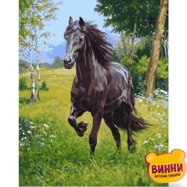 Купити картину за номерами STRATEG Арабський кінь 40*50 см, VA-1844