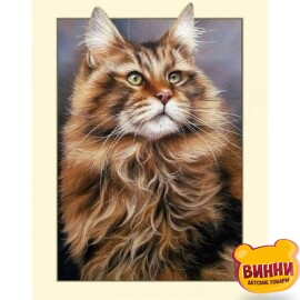 Купити алмазну мозаїку Кіт мейн-кун 30*40 см, без підрамника, в коробці, C521