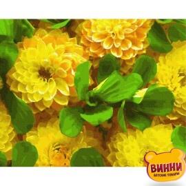 Жовті жоржини GX27272